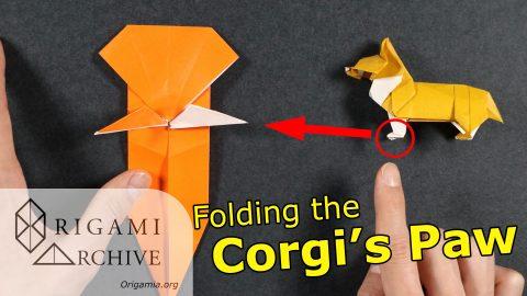 Corgi Paws